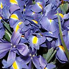 Iris by erdogan49