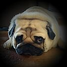 Its A Pugs Life by JaninesWorld