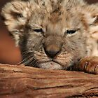 Lion Cub by Keith Jones