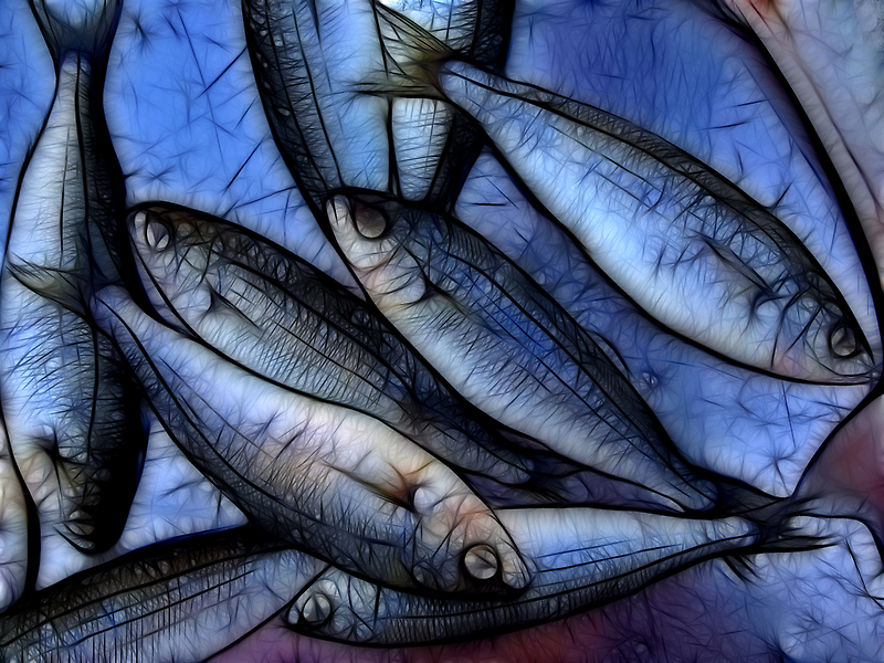Fresh Fish by Stephen Morris
