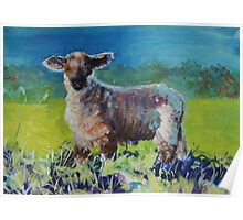 Lamb standing in long grass Poster
