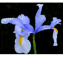 Iris in Blue......... Photographic Print