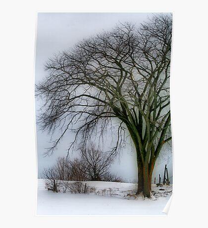 Tree Elder Poster