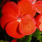 Red geranium by brittle1906