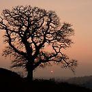 Lone tree at sunset in Devon by peteton