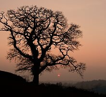Lone tree at sunset in Devon by peteton