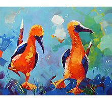 Two Funny Birds Photographic Print