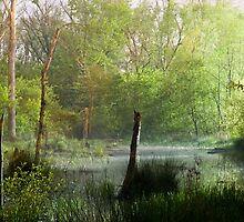 Misty Marsh by Mikel Darling