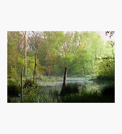 Misty Marsh Photographic Print