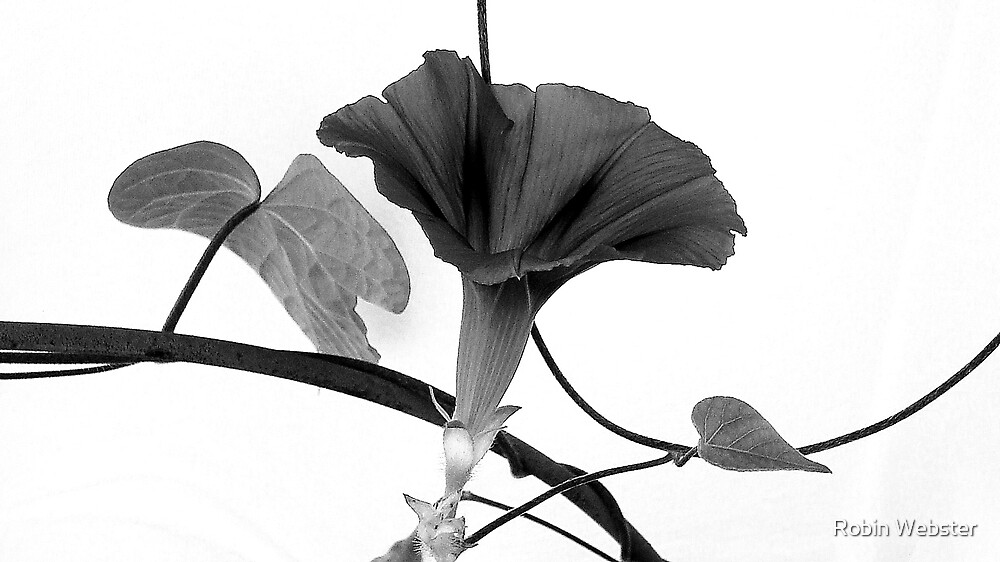 Vine Offering B&W by Robin Webster
