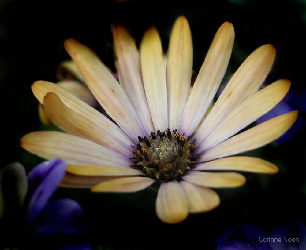 Ode To Spring by Corinne Noon