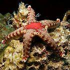 Red Star by Carolien Mermans