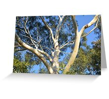 GHOST GUM IN THE SKY Greeting Card