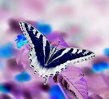 Inverted Swallowtail by Lindsay Dean