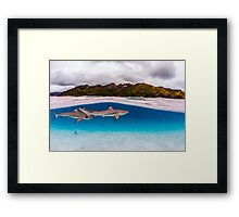 Reef shark Framed Print