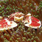 Red Dotted Porcelain Crab by Carolien Mermans