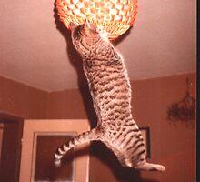 rudi rathunter hanging on/bei Licht sind alle Katzen grau by Werner Franke