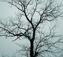 Lonely Tree Waiting For Spring | Center Moriches, New York  by © Sophie W. Smith