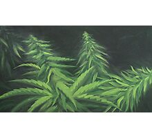 Cannabeauty Photographic Print