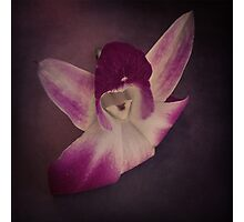 Purple Haze - Orchid Photographic Print
