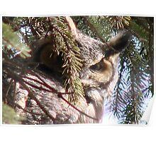 PNW Raptor - Great Horned Owl Poster