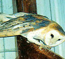 PNW Raptor - Barn Owl (Mystery) by tkrosevear