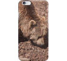 bear in the zoo iPhone Case/Skin