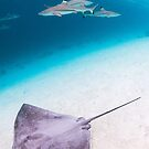 Stingray and Shark by Kana Photography