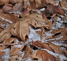 Light snow, frost and dried leaves by TheKoopaBros