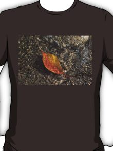 Autumn Colors and Playful Sunlight Patterns - Cherry Leaf T-Shirt