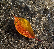 Autumn Colors and Playful Sunlight Patterns - Cherry Leaf by Georgia Mizuleva