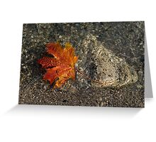 Maple Leaf - Playful Sunlight Patterns Greeting Card