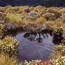 Alpine pond - Table Mountain, Tasmania by Syd Winer