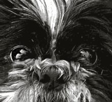 Shih-Tzu Says Woof! Woof! Sticker
