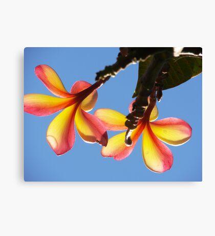 Frangipani Fruits Canvas Print