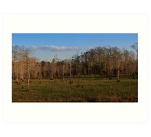 Panoramic of Big Cypress National Preserve, Florida Art Print