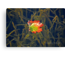 Floating Leaf | Center Moriches, New York  Canvas Print