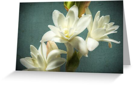 Tuberose by Colleen Farrell