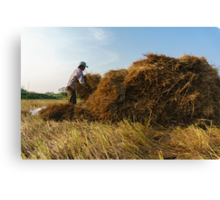 Straw collecting Canvas Print