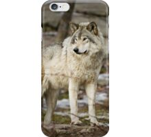 Timber Wolf on Guard iPhone Case/Skin