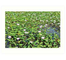 Morning-glory pond Art Print