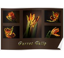Parrot Tulip Collage Poster