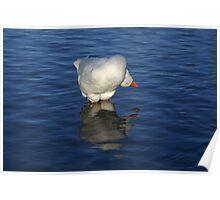 Goose Yoga Poster