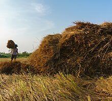 Carrying straw by ZorroTran