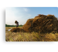 Carrying straw Canvas Print