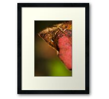 an insects world Framed Print