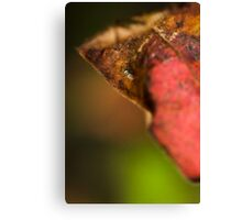 an insects world Canvas Print
