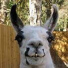The Llama by MichelleR