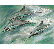 Dolphin trio  Photographic Print