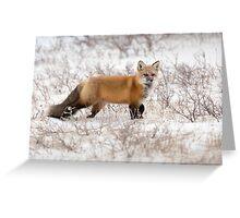 Red Fox Listening Greeting Card
